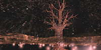 Osmose - Tree Pond - Click for enlargement